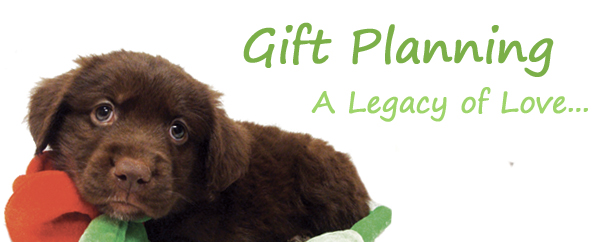 Gift-Planning-Banner