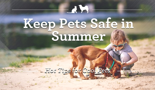 Summer_Pet_Safety_Blog